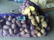Картофель оптом урожай 2017 от производителя